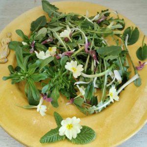 donner envis de manger des plantes sauvages